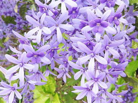 Garden Bunga Hias 30 jenis tanaman hias untuk taman dinding vertikal beserta