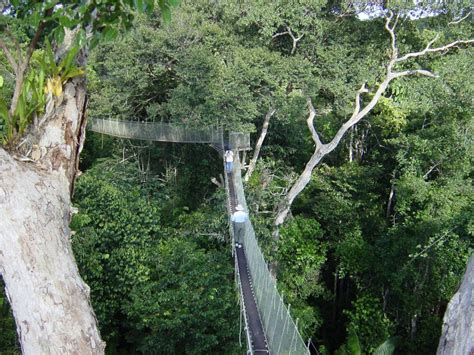 canopy amazon image gallery iquitos jungle