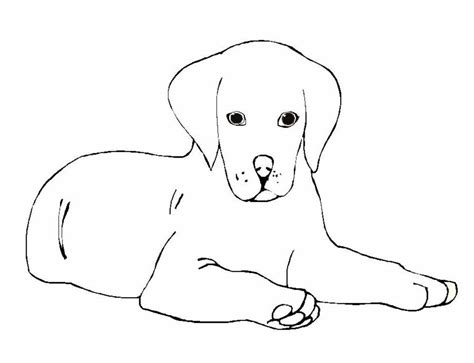 labrador puppy coloring page pictures to colour dogs