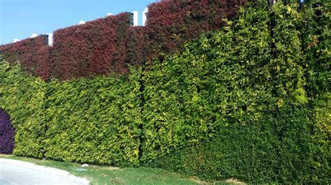 Atlantis Vertical Garden Outdoor Green Wall Atlantis