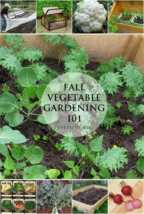 Fall Vegetable Garden Ideas 654 Best Simple Garden Ideas Images On Simple