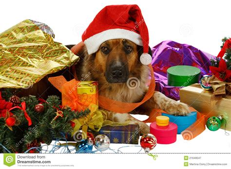 christmas gift ideas for dog groomer mixed breed with presents stock image image of white grooming 21649547