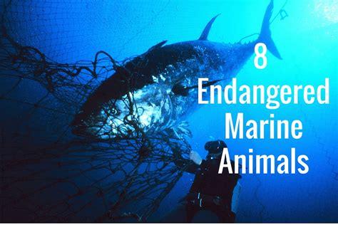 Marine Search Endangered Wildlife Endangered Marine Animals Driverlayer Search Engine