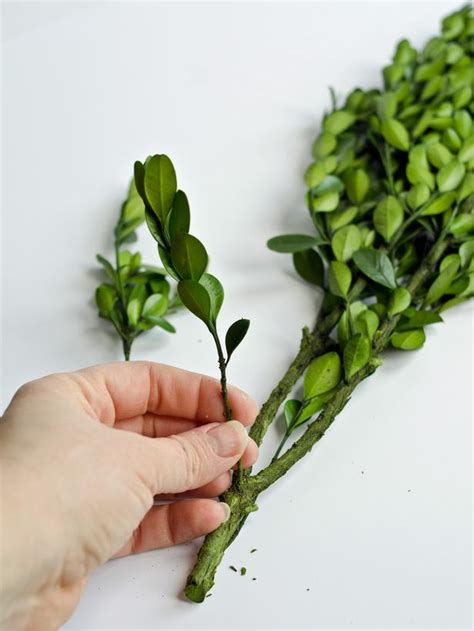 how to make a boxwood topiary how to make boxwood topiaries easy crafts and