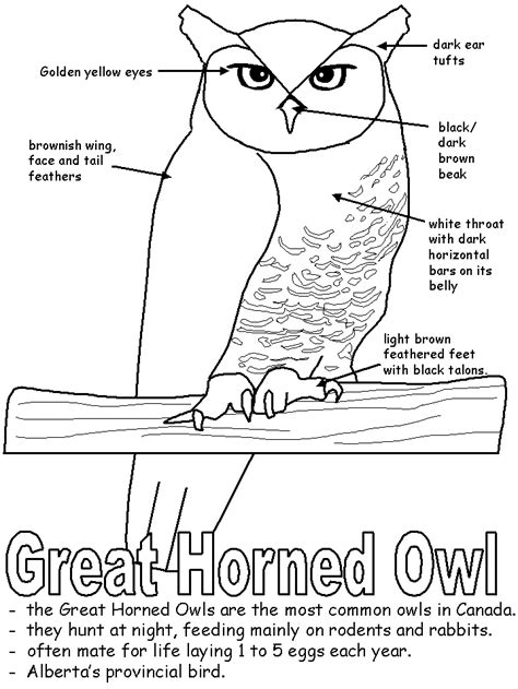 printable owl activities great horned owl with labels