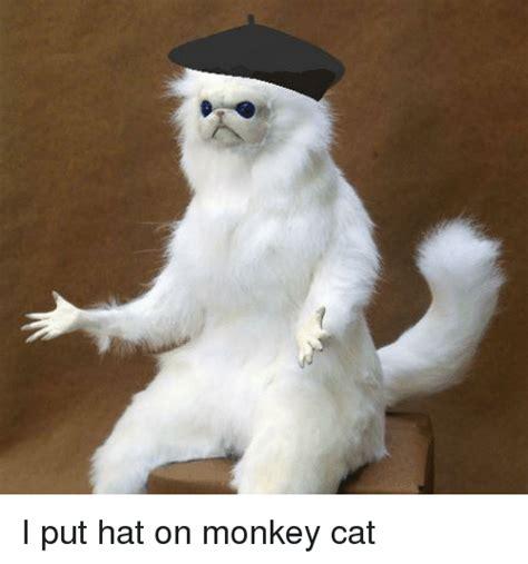 Dank Cat Memes - monkey and monkey meme on sizzle