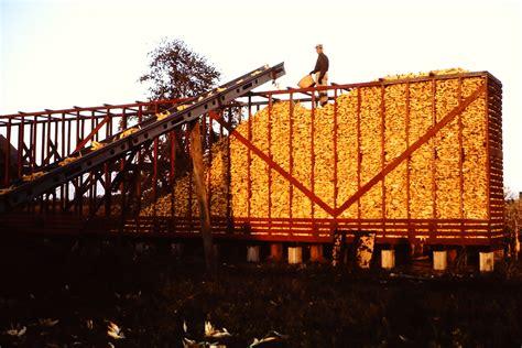 How To Build A Corn Crib by Building Of A Corn Crib Farm Yarns