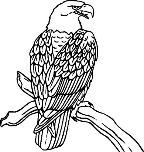 coloring pages for quail bird coloring pages coloring pages to print