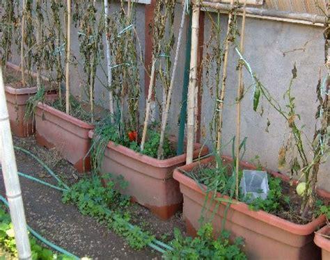 orto nei vasi preparare i terricci per le semine di ortaggi in vaso
