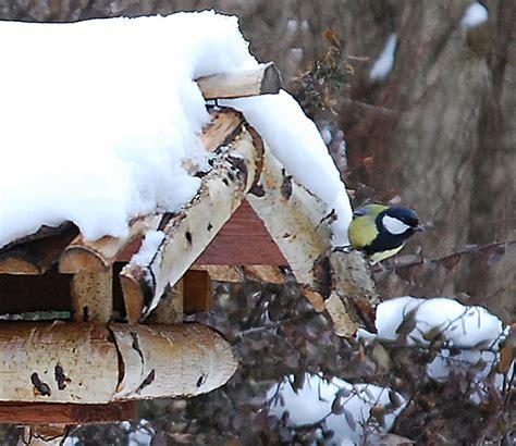 Winter V Gel F Ttern 5749 by V 246 Gel Im Vogelhaus Bild V Gel Winter Schnee Vogelhaus