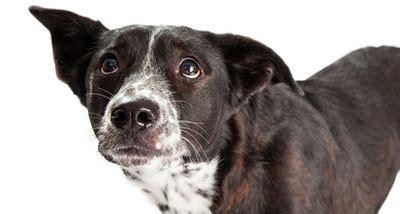 wann verlieren hunde ihre milchzähne warum ist eifers 252 chtig singles l 252 gde