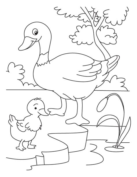 coloring pages of ducks and ducklings duck and duckling coloring page download free duck and