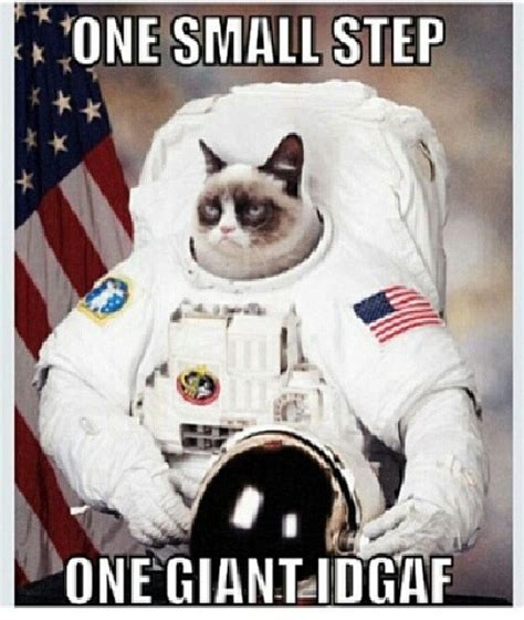 Astronaut Sloth Meme - grumpy cat astronaut i grumpy cat pinterest sloths fanart and grumpy cat