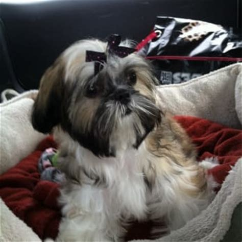 scrubby puppy scrubby puppy pet wash salon 54 photos pet groomers upland ca reviews yelp
