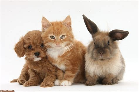 puppies and bunnies puppy kitten and a bunny what more could you want bunnies puppies litle pups