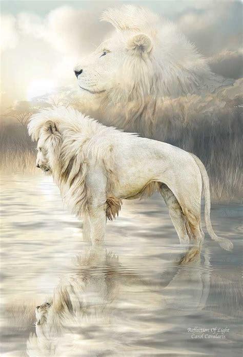 white lion reflection  carol cavalaris paintings