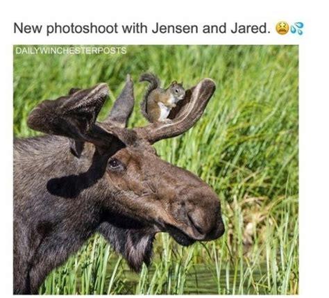 Moose Meme - moose meme tumblr