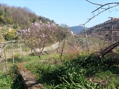 ceggio dei fiori pietra ligure agenzia immobiliare liguria rustico dell