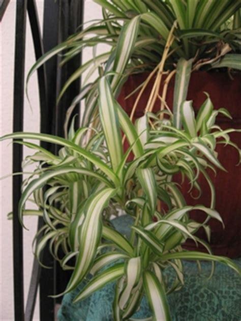 elenco piante verdi da appartamento piante verdi da piante verdi da with piante verdi da