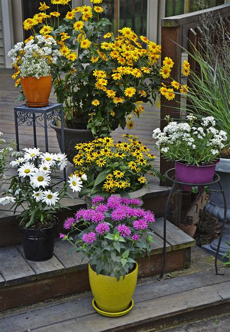 perennial container garden the complete guide to growing perennials in containers