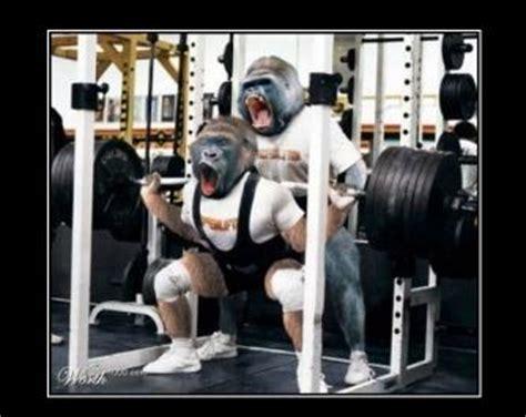 gorilla bench press crossfit one world