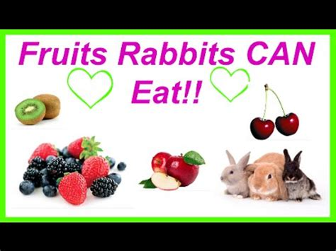 vegetables a rabbit can eat fruits rabbits can eat