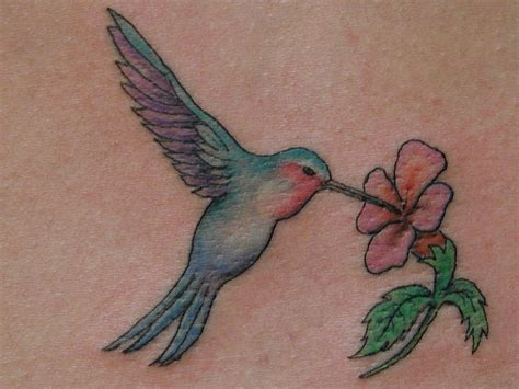 humming bird tattoo design hummingbird images designs