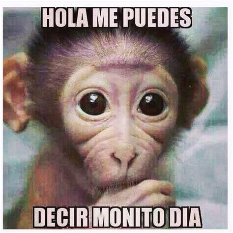 im 193 genes de monos chistosos con frases imagenes de monos con frases chistosas imagenes de