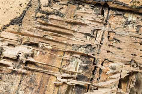 Columbia SC termite damage repair   Fight the bite!