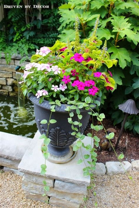Coleus Planters by Flowers For Outdoor Planters Creating The Mix