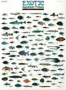 Aquarium Fish Names Exotic aquarium fishes
