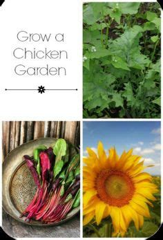 1000 ideas about organic chicken feed on pinterest