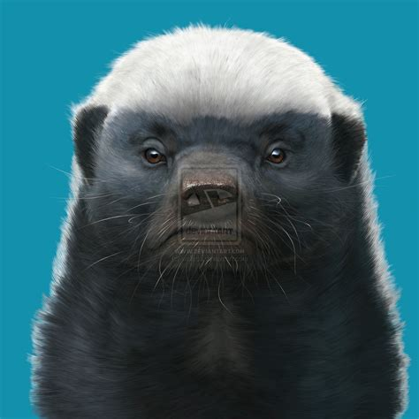honey badger by wallace on deviantart