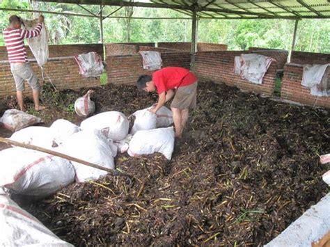 Pupuk Kalsium Cantik 10 manfaat eceng gondok tanaman liar yang tumbuh di sungai