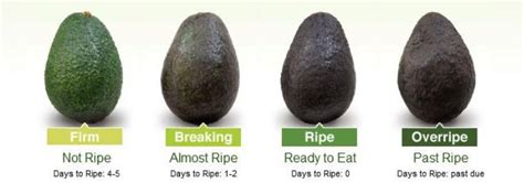 avocado safe for dogs ottawa valley whisperer avocado health benefits for dogs and cats
