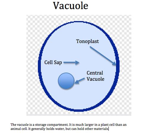 diagram of vacuole centriole cytoskeleton and vacuole 171 simplebiology