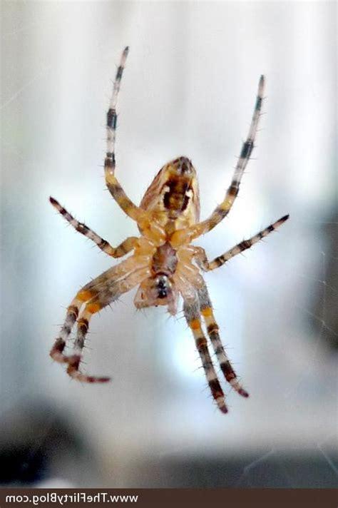 Garden Spider Utah California Garden Spider Photo
