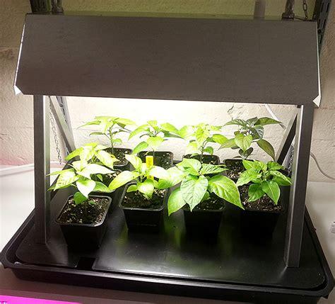 Wann Tomaten Säen 5395 by Ny Chili Belysing F 246 R Uppdrivning Av Sm 229 Plantor Mini