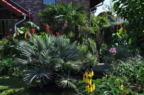 garten palmen garten 2010 exoten und palmen claus willich