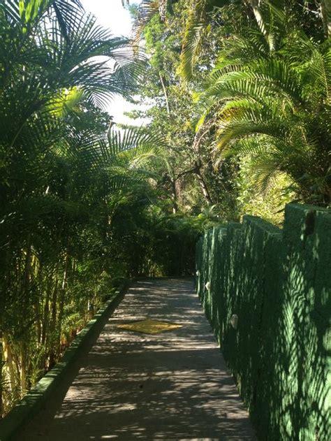 ghost of atlantic jungle resort atlantica jungle lodge ilha grande brazil reviews