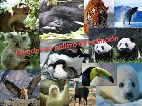 imagenes de animales nuevas especies especies en peligro de extinci 243 n