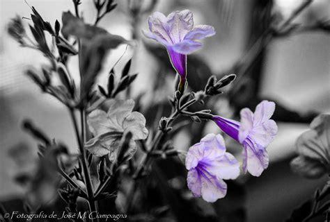 imagenes blanco y negro con un poco de color flores y plantas las fotos del profe jos 233