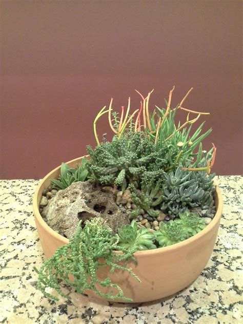 dish garden containers containers forum my succulent dish gardens garden org