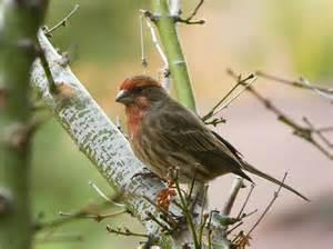 a few common backyard birds fz150 steve s digicams forums