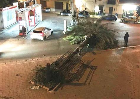 il vento nord testo ancora danni per il vento in sicilia alberi caduti nel