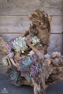 Driftwood Planters For Sale by Best 20 Driftwood Planters Ideas On Succulents Garden Succulents And Drift Wood