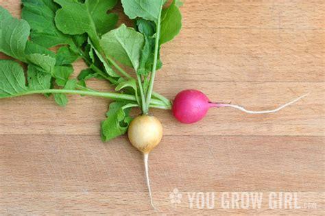 Pink Radish Squishy pink and yellow radishes you grow
