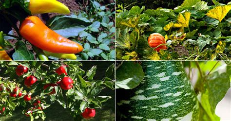 Bristol Gardens Eco Vegetable Garden Garden Fruits And Vegetables