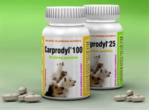 anti inflammatory drugs for dogs could the that cost this beloved pet its kill