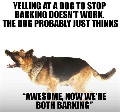 Barking Dog Meme - 25 best stop dog barking ideas on pinterest dog barking